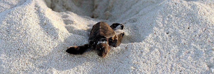Turtle Escaping Nest electric city aquarium scranton pa