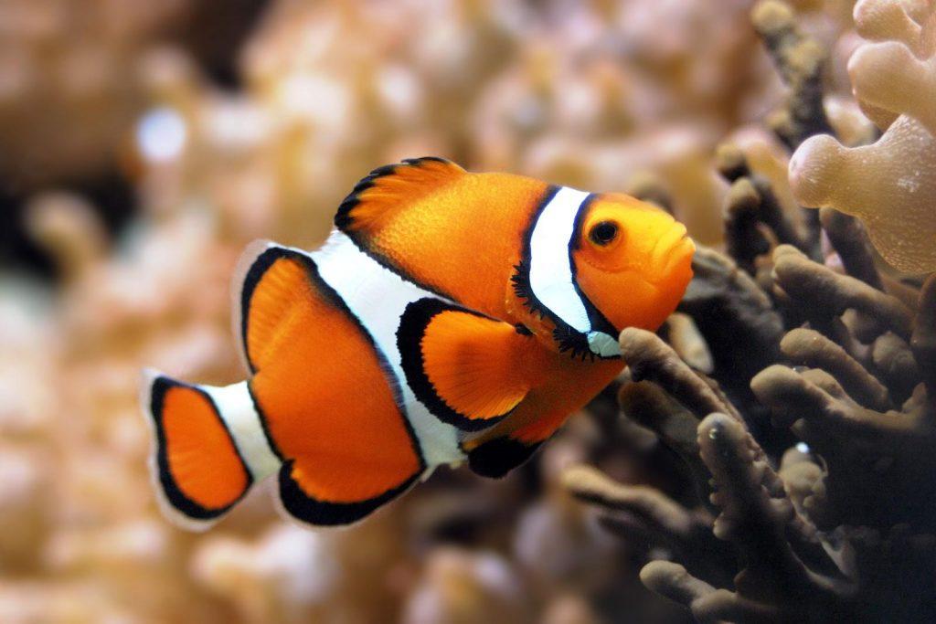 Clownfish electric city aquarium scranton pa