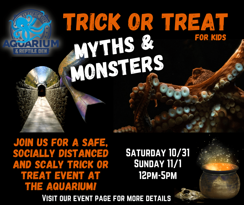 Halloween Events 2020 Scranton Pa Electric City Aquarium & Reptile Den | Scranton, PA
